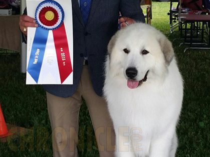 show name toledo kennel club location maumee oh show date saturday ...