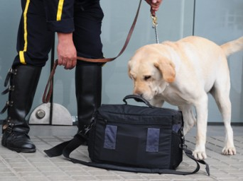 K9_SECURITY_LabSniffer
