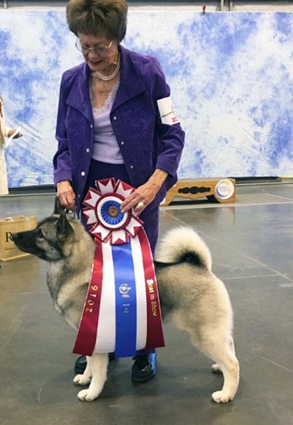 Canine Chronicle   Autos Weblog