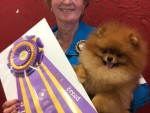 GCh Moxiepoms Max Schmeling