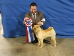GCh Brekkukots Allies with Underdog CGC