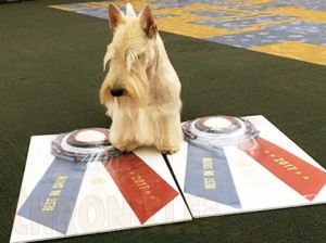 Erie Kennel Club Dog Show