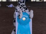 GCH Baysides Good Fortune