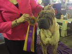 GCh. Good Fortune Promise of Tomorrow at Luckywun