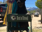 GCh. Misty lake's Reign at Darkwaters