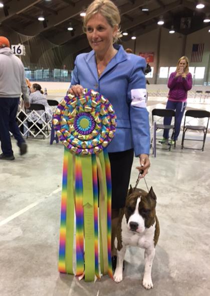 Trenton Kennel Club Dog Show