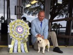 GCH Bandogs A League Of His Own At Tx-Star