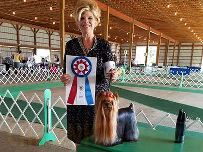 Holland Michigan Kennel Club – Friday, July 14, 2017 | Canine Chronicle