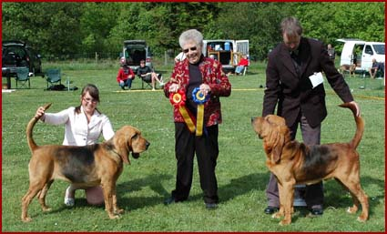 Legendary American breeder Mrs Anne Legge judges Best In Show at Danish Bloodhound Club Show in May 2007