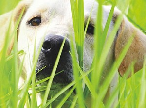 Nasty Seeds Grass Awn Migration Infections Canine