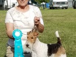 GCH Elmdale's Journey From Purston