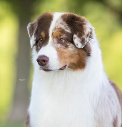 Dog Kennel Fremont In
