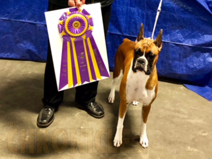 Houston Boxer Club – Friday, December 1, 2017 | Canine