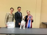 GCh. Chesterhope Master of T Arts