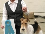 GCh. Elmdale's Journey From Purston