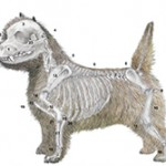 Illustrated Standard Cairn Terrier