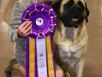 GCH Eastwinds Born to Perform