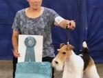 GCH Elmdales Journey From Purston RATS