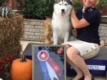 GCHG Sharin Nick Of Dynasty Rc Kennel BIS