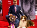 GCH Silverwood's Kiss of Fire at Limelite