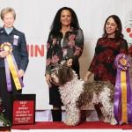 Ott Emanuel February 2019 Canine Chronicle Ad B