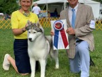 GCHP Sharin Nick Of Dynasty Rc Kennel BIS