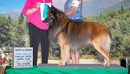 Camellia Capital Kennel Club NOHS Results – Saturday, July