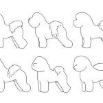 BichonFrise_dogs