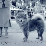 CC-Chow Chow07.Choonam Chu Tang. Photo Arthur Weisz 1938