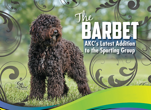 The Barbet Akcs Latest Addition To The Sporting Group
