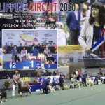 13th DERBY SHOW 2020 - FCI Show - Jadranka Mijatovic