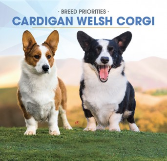 F Cardigan Welsh Corgi