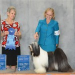 Tibeten Terrier.  GCHS. Barnstorm Blue Blood Royalty By Dzine
