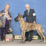 B Great Dane - GCh. KMA Lemaire's Gladiator