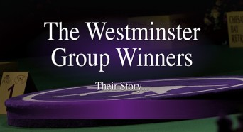 F Westminster G Winners