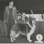 This handsome Collie is Ch. Alora Choir Boy making a prestigious win here under Alva. How many of you recognize the handler, the late Phil Marsh? When Phil retired from handling, he joined the judging ranks in which he became a successful all-around judge.