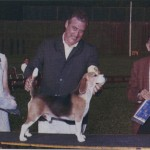 A record holding Beagle for many years, this is Ch. King's Creek Triple Threat, owned by Marcia Foy. Among his numerous honors, he had some exciting wins from Alva. Here Alva is awarding him one of his Best in Hound Group victories in 1969 with Tom Foy, Jr. handling.
