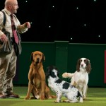 The Worlds Greatest Dog Show