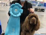 GCH Remedi's What Can Brown Do For You