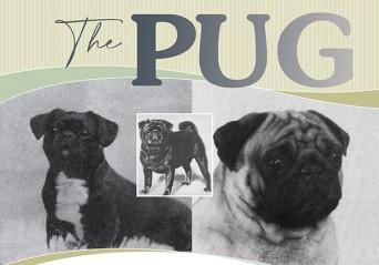 F The Pug