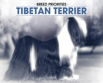 F BP Tibetan Terrier