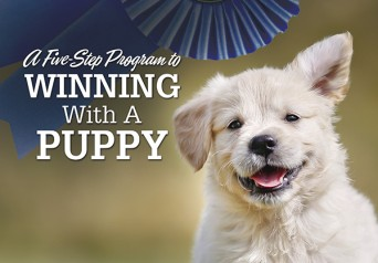 F Winning Puppy