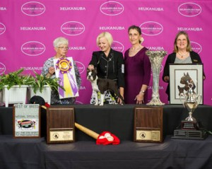 boston terrier club of america boston terrier club of america may 23 2014 canine chronicle 2563