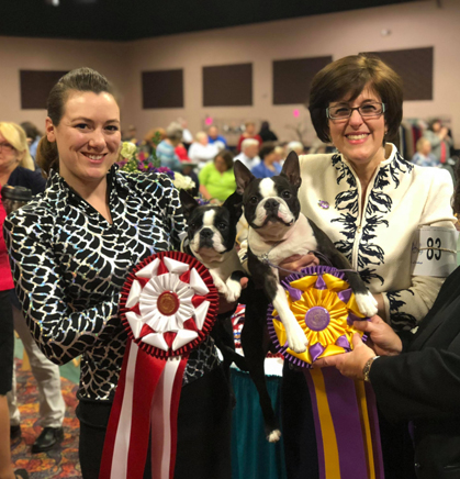 boston terrier club of america boston terrier club of america national specialty friday april 27 2018 canine 7494